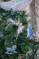 "Статуэтка подвесная ""балерина"", в асс, разм.10x15cm CAA111220/4 Вид4"